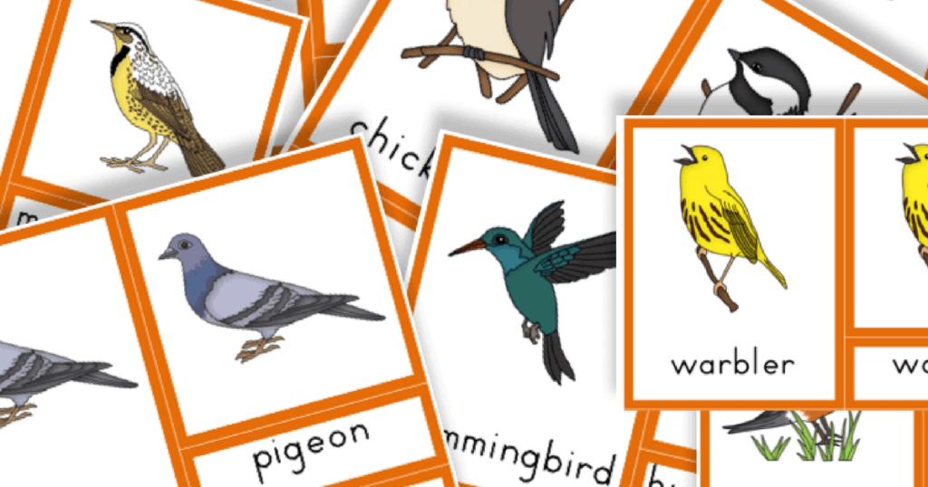Free Printable: Common Birds