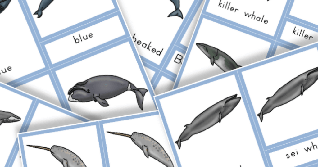 Free Printable: Types of Whales