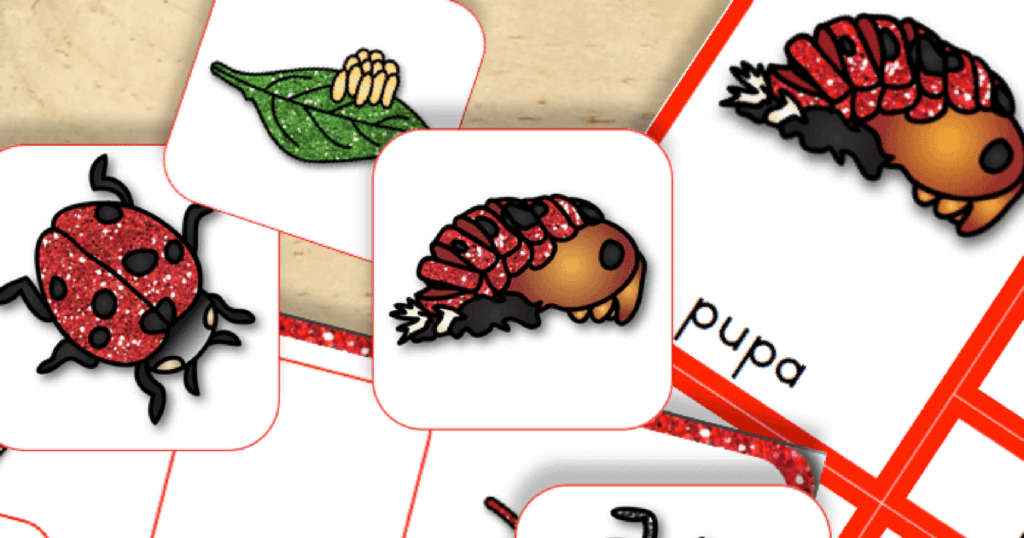 Free Printable: Life Cycle of a Ladybug