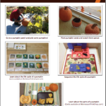 Ideas for Science Activities