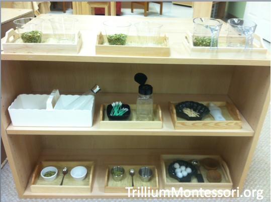 Fine Motor Shelf Green