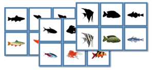 Fish Shadow Matching Cards