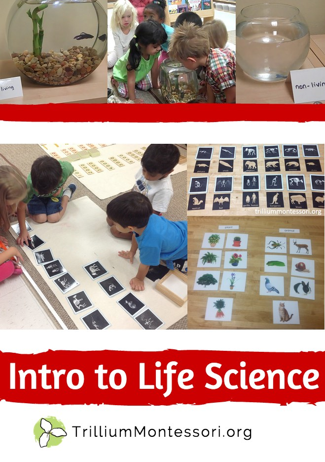 Intro to Life Science in Preschool