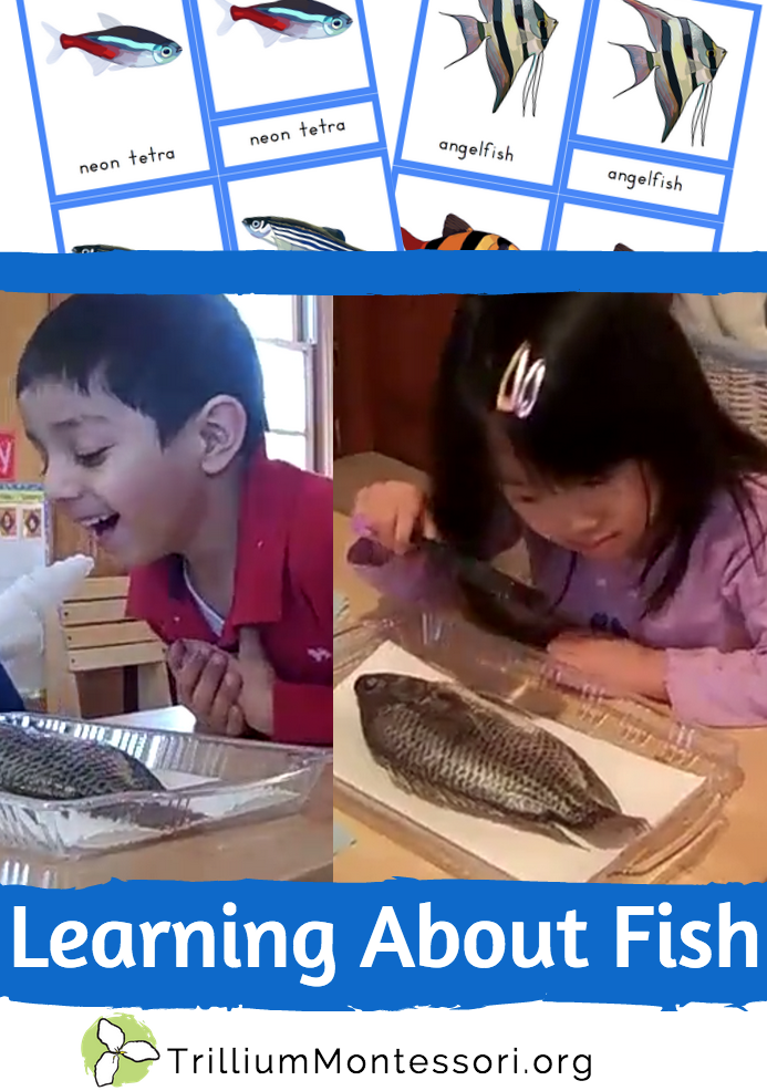 Learning About Fish