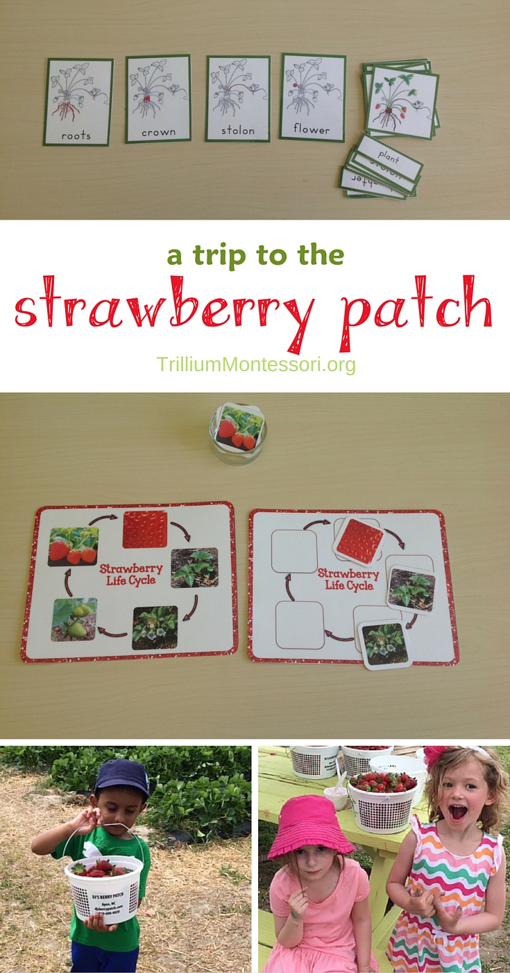 Preschool activities for the Strawberry Patch