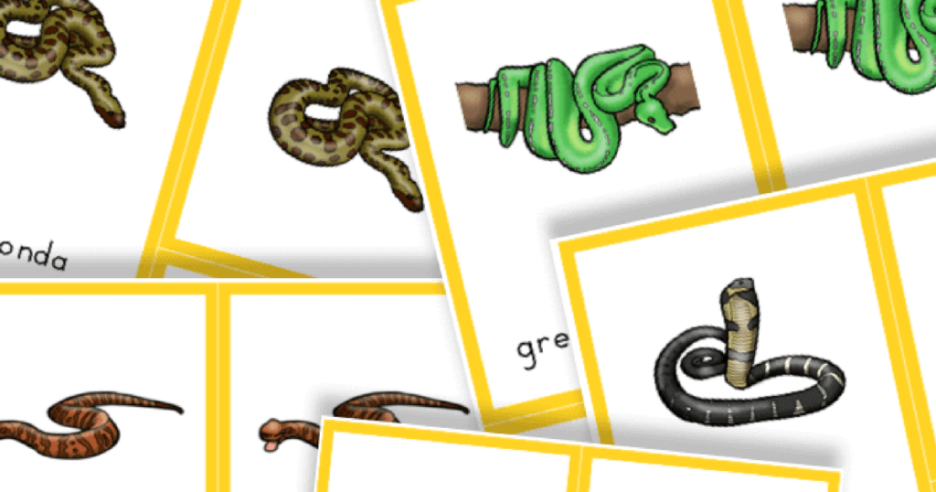 Free Printable Snakes 3 Part Cards