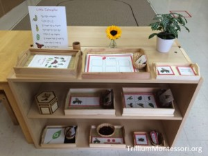 Bugs and Spring Early Language Shelves from Trillium Montessori.