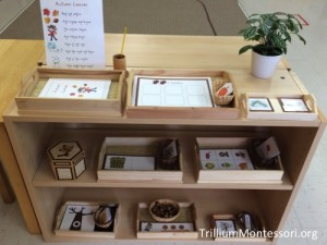 Fall Early Language Shelves from Trillium Montessori