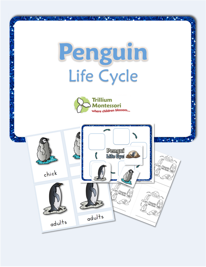Life Cycle of a Penguin Free Printable from Trillium Montessori