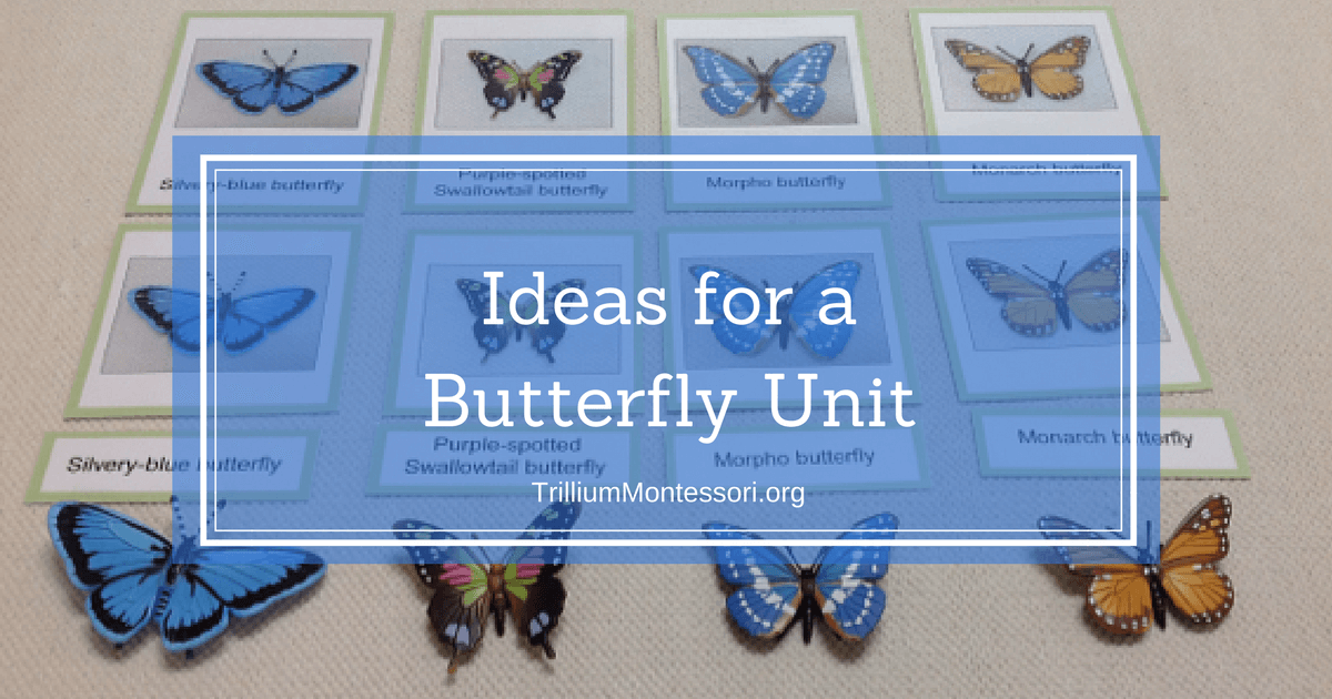 Classroom Unit Ideas : Classroom ideas for a butterfly unit
