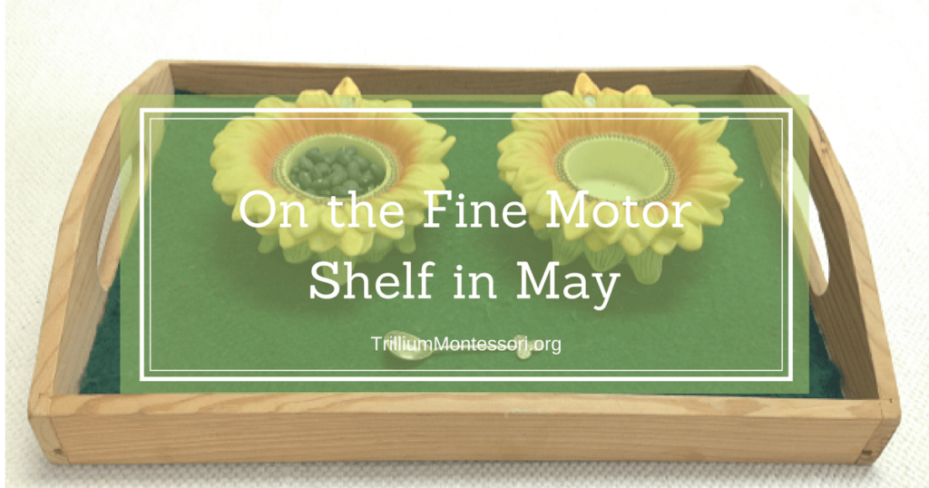 On the Fine Motor Shelf in May