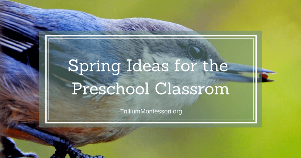 Spring Ideas for the Preschool Classroom