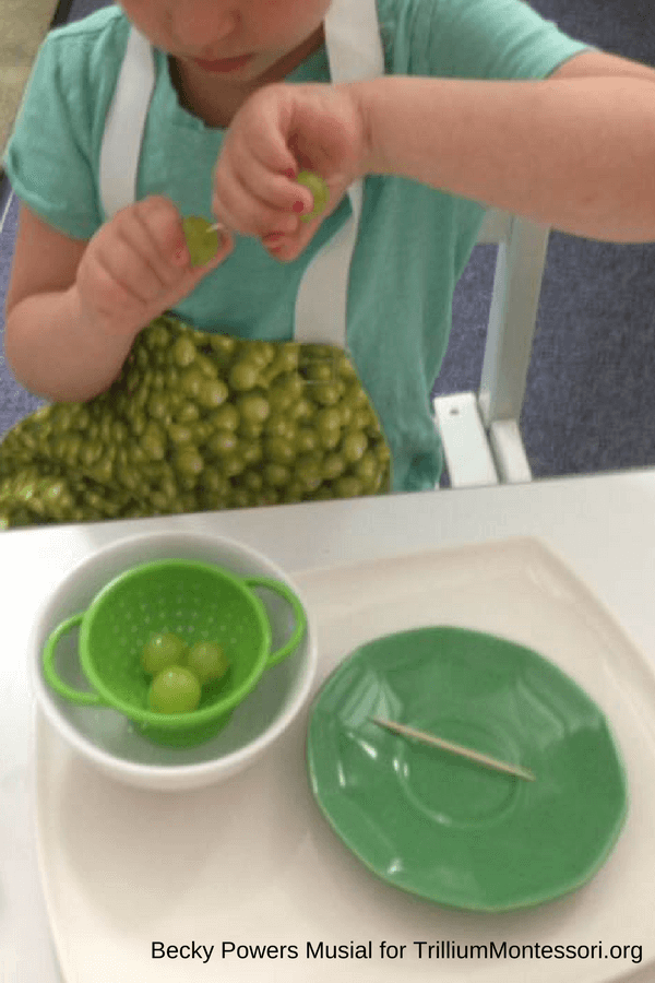 Montessori Food Preparation and Cooking Grapes