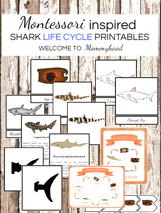 Corn Montessori Life Cycle Printables | TpT
