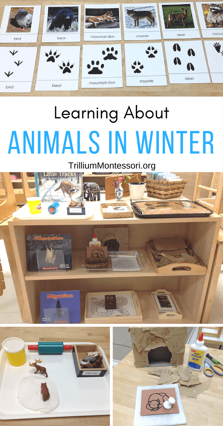 Animals In Winter moreover Writeroom moreover Whats The Weather Center furthermore Bingo X additionally Letter E Alphabet Craft Preschool. on free preschool printables
