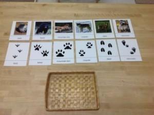 Animals In Winter Trillium Montessori
