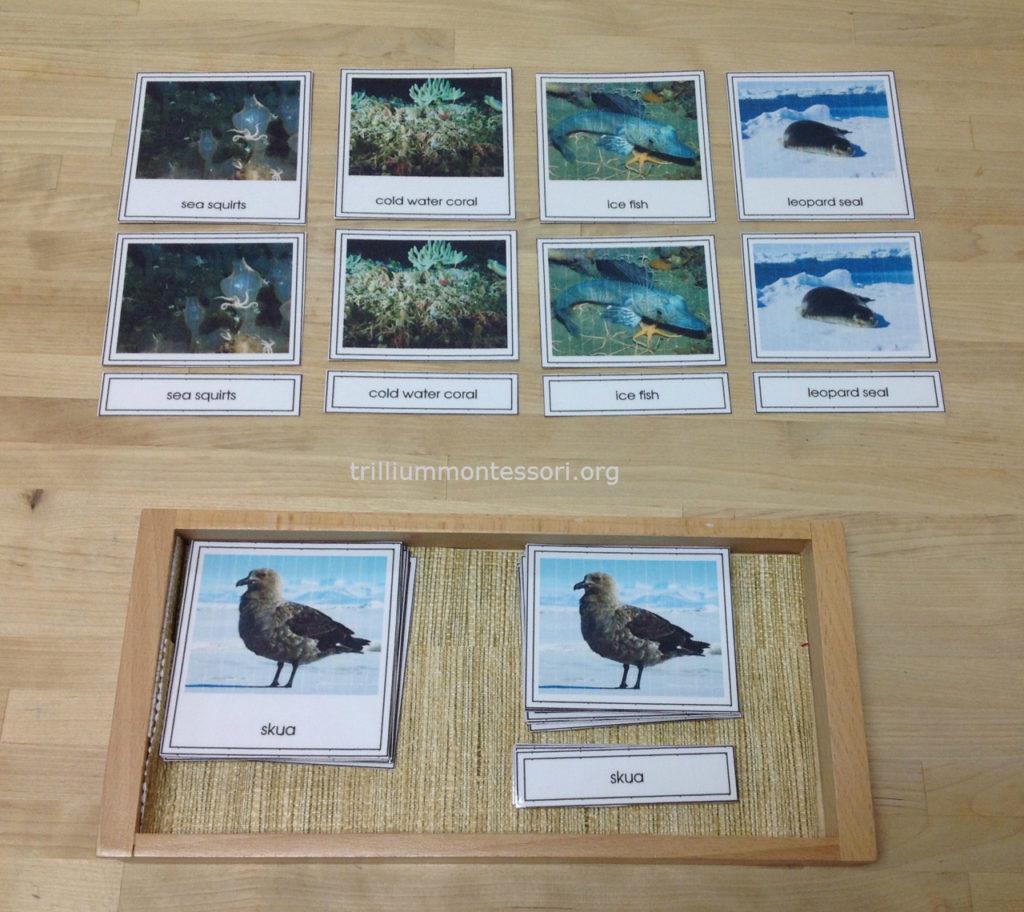 Animal Three Part Cards