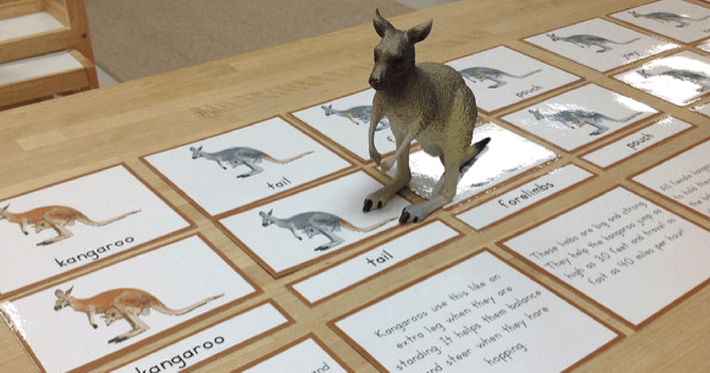 Preschool and Montessori Activities for Learning About Australia