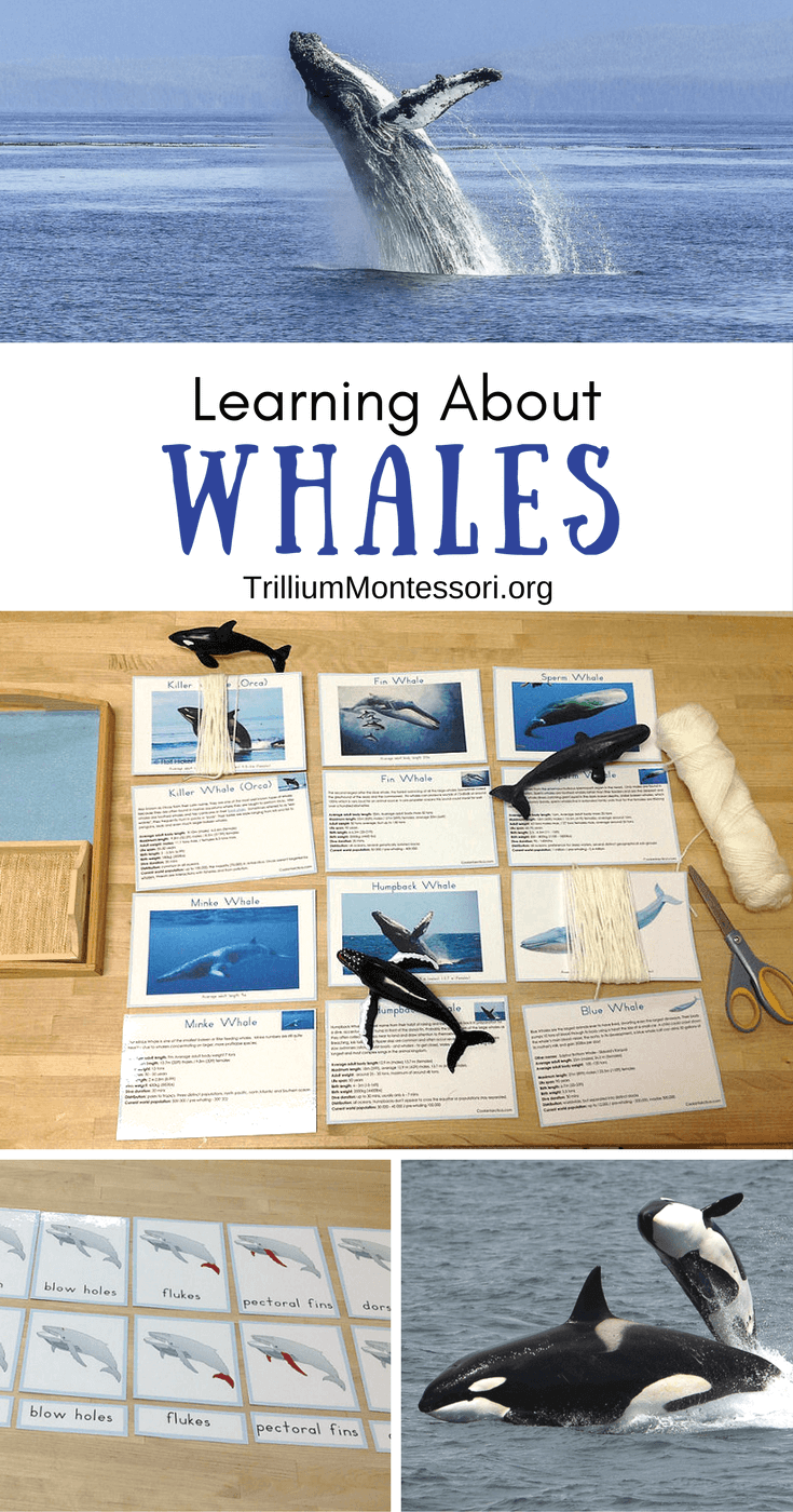 Preschool and Montessori activities for learning about Whales