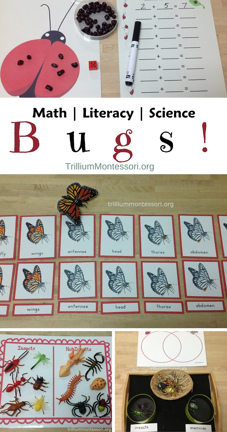 Bugs Math Literacy and Science Montessori Activities