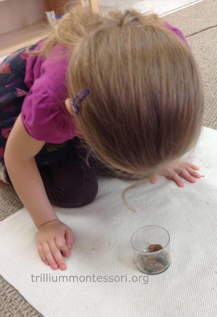 Examining a cicada shell