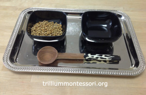 Spooning corriander seeds with an African spoon at Trillium Montessori