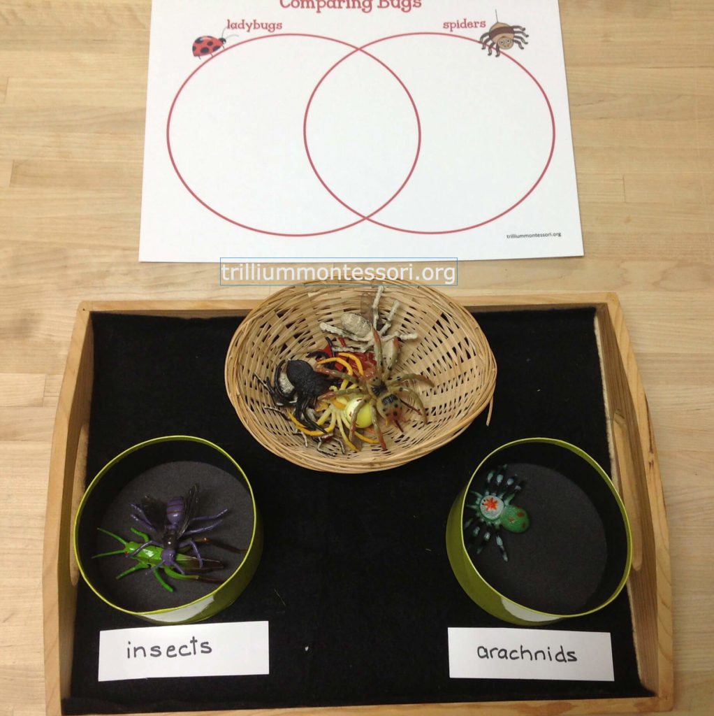 Learning About Bugs Activities For Preschool And Montessori Name Blocks Venn Diagrams Names On Pinterest Theres A Little Diagram Mat Writing Down Characteristics Of Insects Vs Arachnids The Labels Sorting Are Also Available In This Set