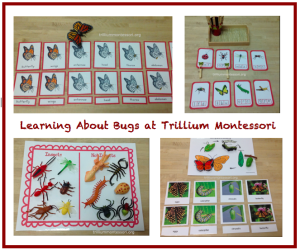 Learning About Bugs at Trillium Montessori