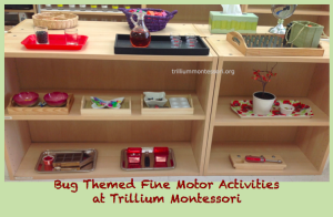 Fine Motor Shelf at Trillium Montessori- Bug theme