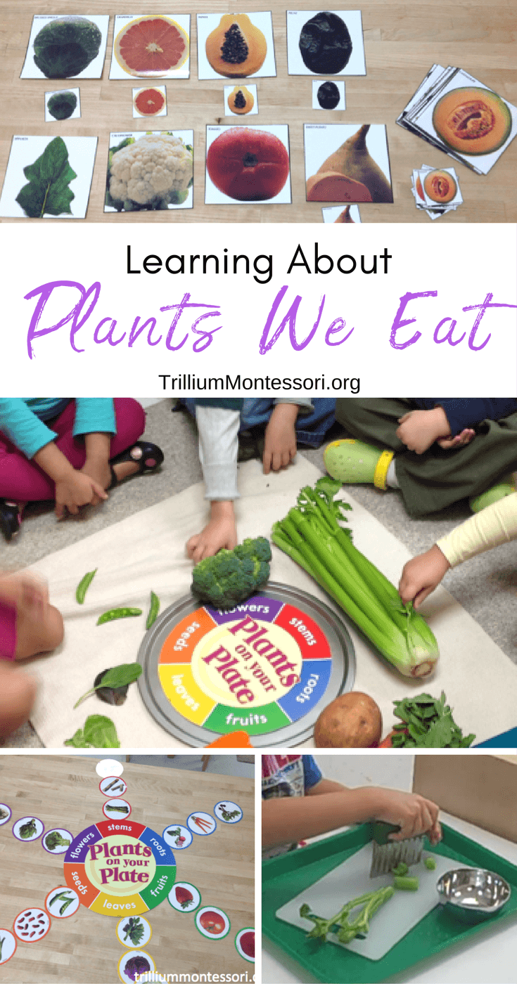 Preschool activities for learning about parts of plants and edible plants