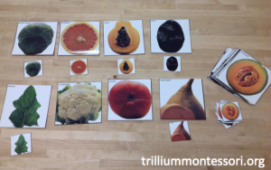 Matching Vegetable Pictures