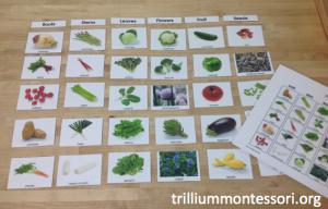 Parts of a Plant Vegetables