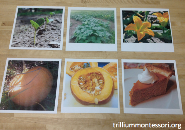 Pumpkin sequencing cards