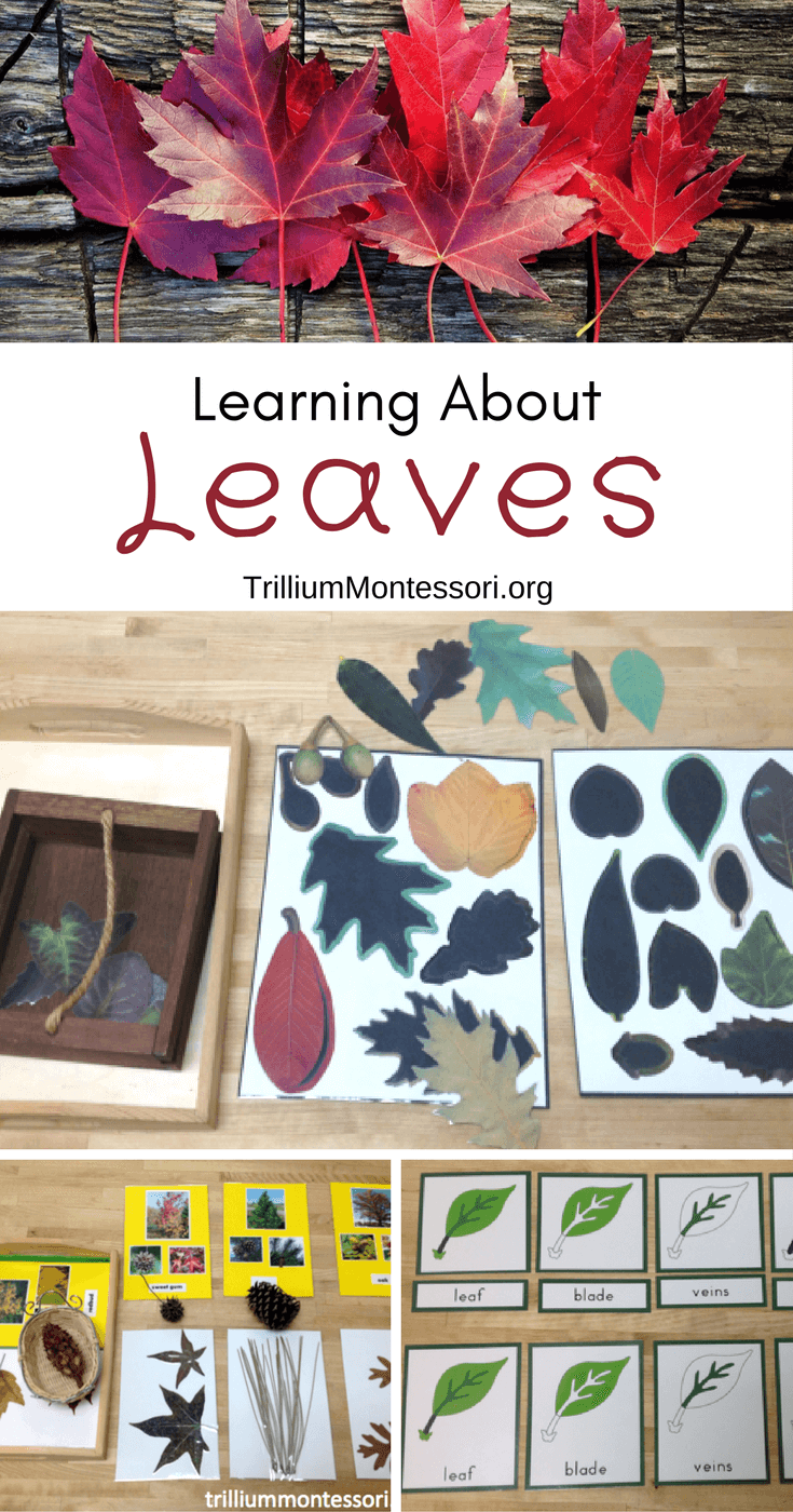 Preschool activities for learning about leaves and fall