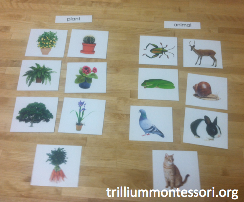Plant and Animal Sorting