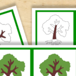 Free Montessori Printable Parts of a Tree