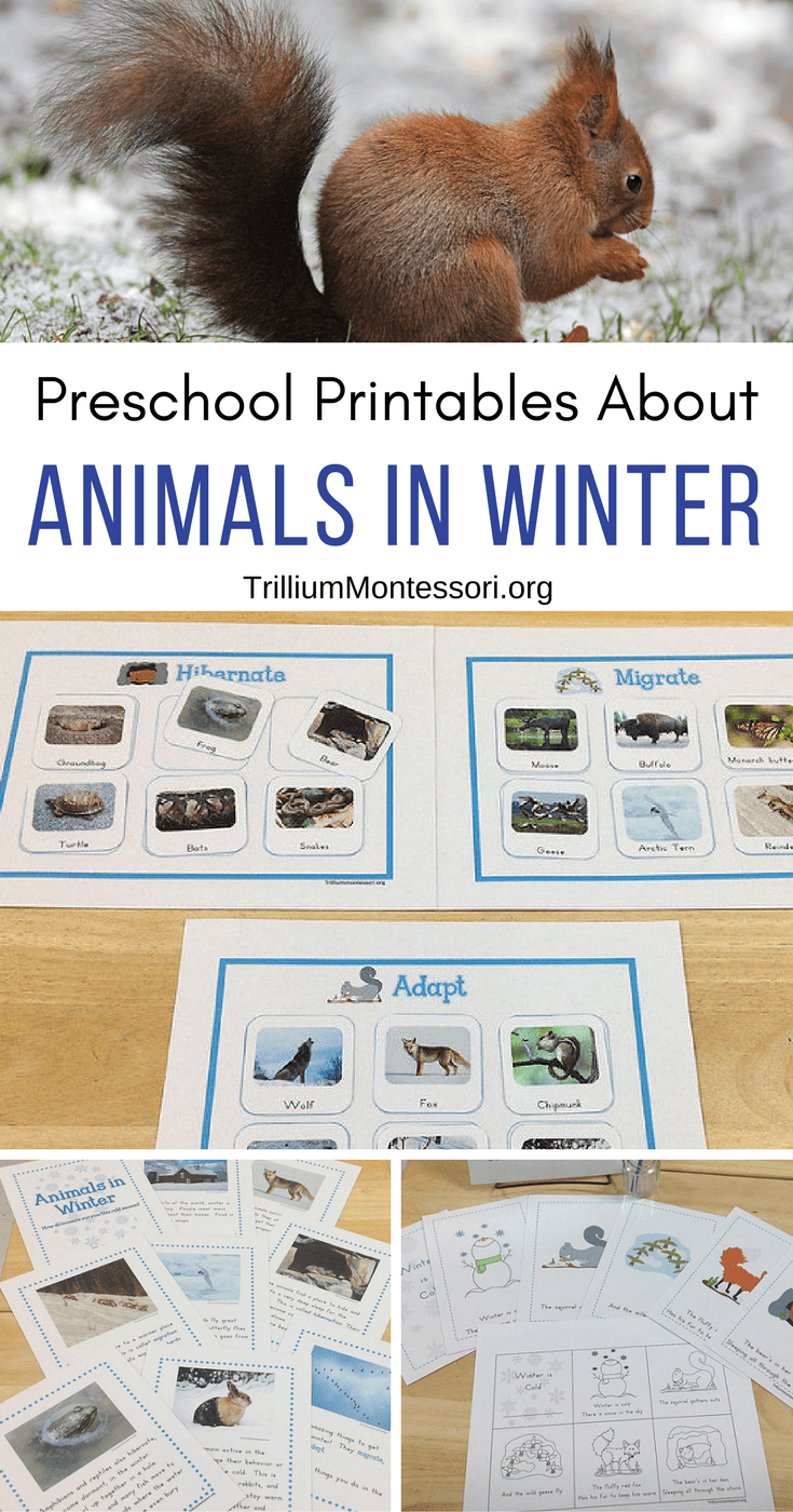 preschool printables for learning about animals in winter