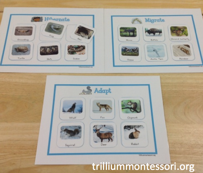 Animals In Winter Unit Trillium Montessori