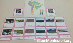 Biomes of South America
