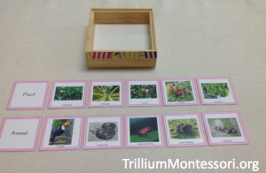 Sorting Plants and Animals from South America