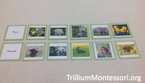 Spring Plant and Animal Sorting Cards