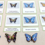 Ideas for a Butterfly Unit