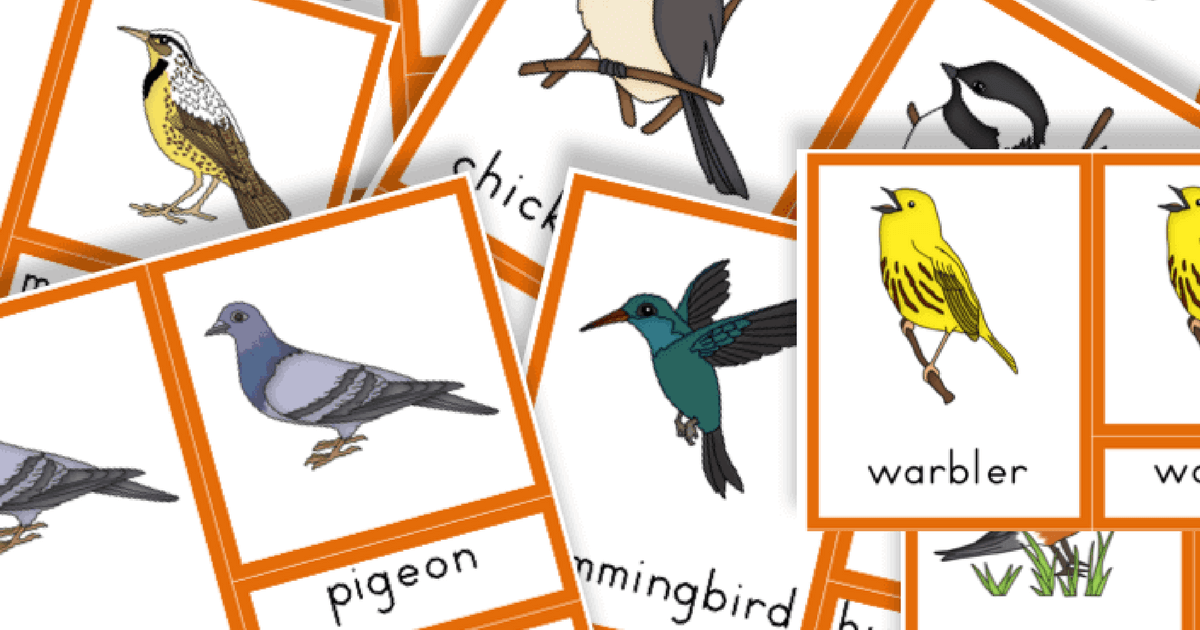 graphic about Printable Bird called Totally free Printable: Well-liked Birds - Trillium Montessori