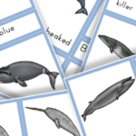 Free Printable Types of Whales