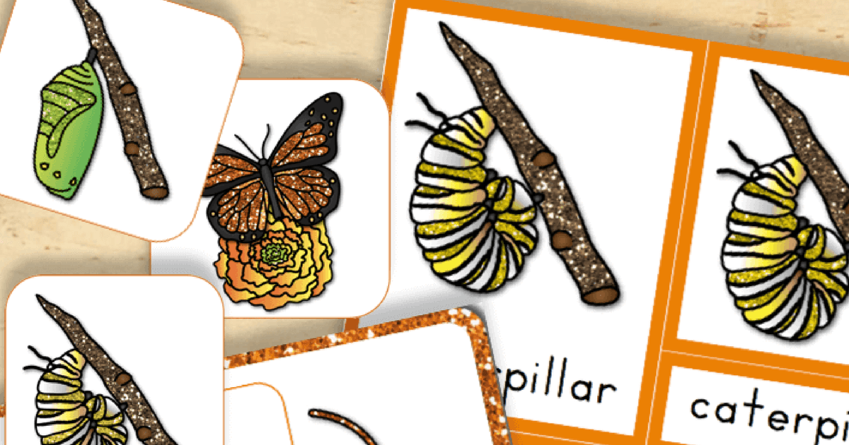 image about Printable Butterflies named Cost-free Printable: Existence Cycle of a Butterfly