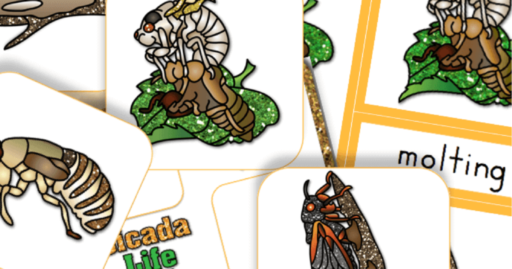 Free Printable Life Cycle of a Cicada