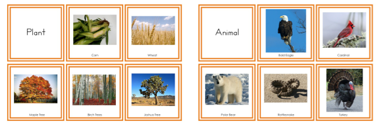 Continents A Z Plant and Animal Cards