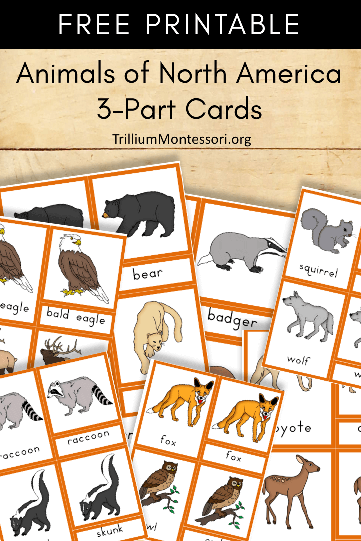 Free Printable Animals of North America 3 part cards