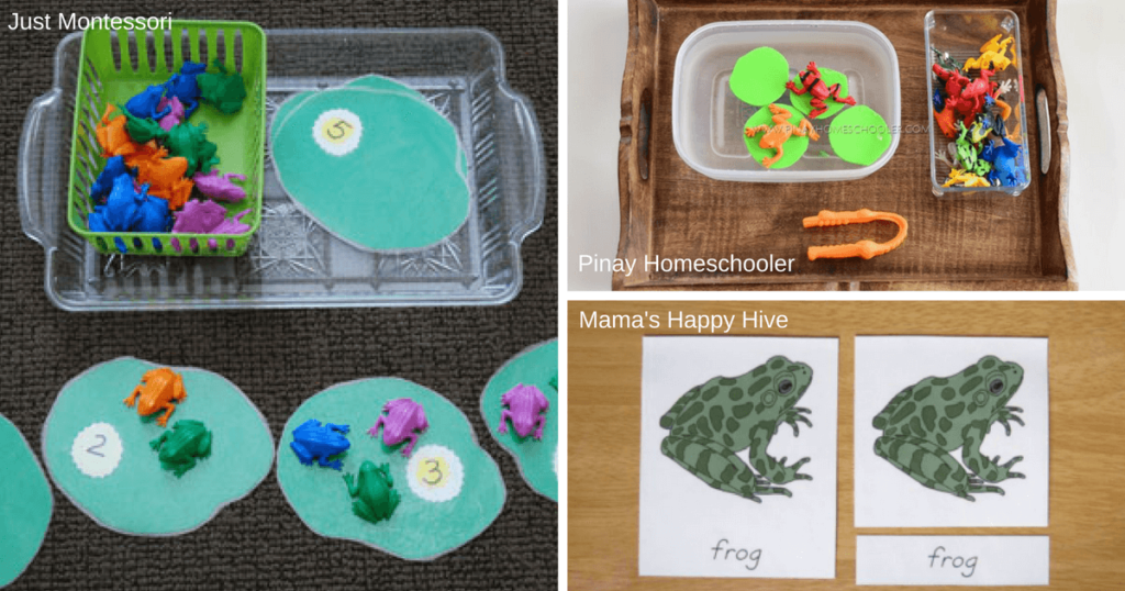 Montessori Resources for Learning About Frogs and Amphibians