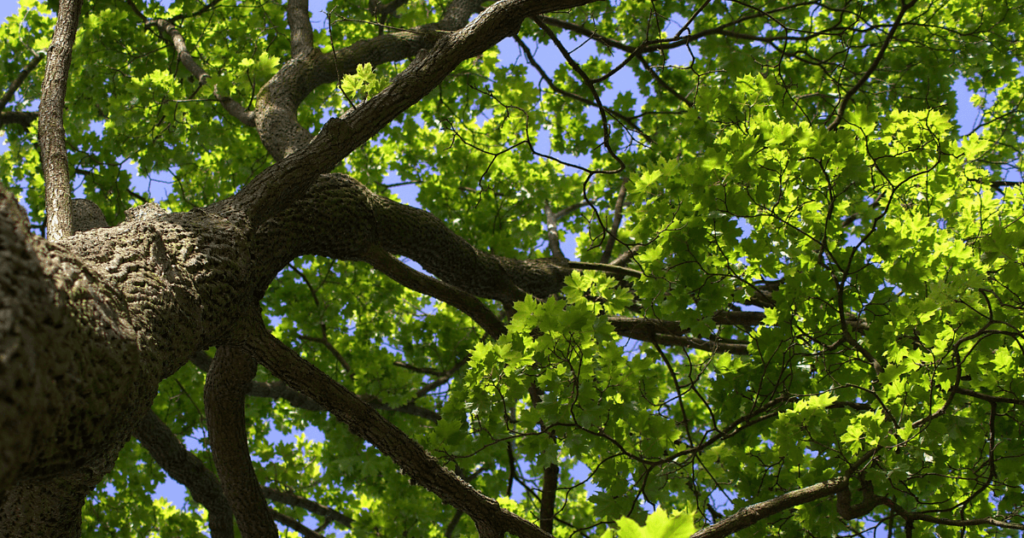 The Montessori Tree